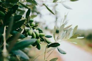 masque cheveux huile de coco huile d'olive